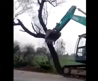ショベルカーが木を倒す