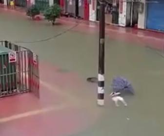 【動画】台風の豪雨で道路が冠水。配電設備から漏電し道を渡る高校生ら複数が感電死