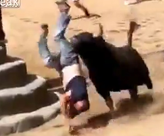 暴れ牛に襲われ死亡
