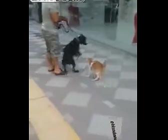 クレイジーな猫