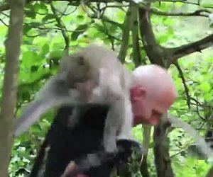 サルに噛まれる観光客