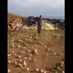 【動画】市職員が腐った卵を大量に捨てた結果、とんでもない事が起きる