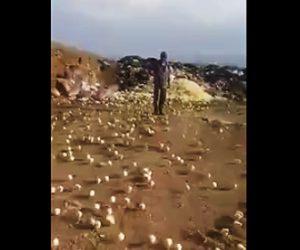 大量の雛が孵化する