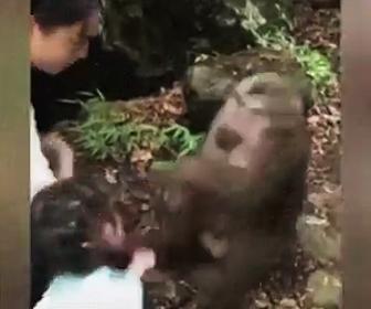 サルに殴られる