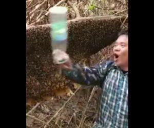 蜂に刺される