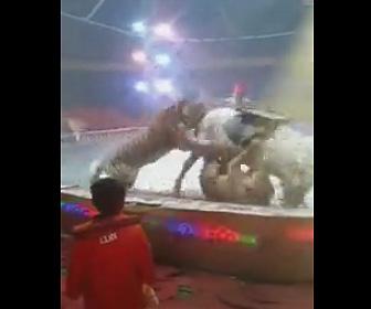 トラが白馬に襲いかかる