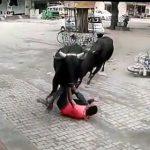 【動画】バイクに乗ろうとする男性に暴れ牛が突っ込んで来る衝撃映像