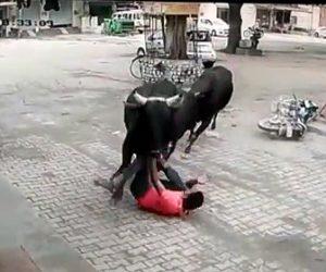 暴れ牛が突っ込んで来る