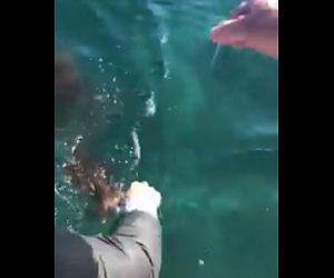 イカがスミを吹く
