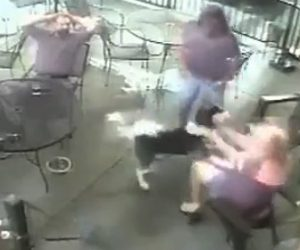 レストランでハスキー犬に噛まれる