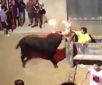 暴れ牛が女性に襲いかかる