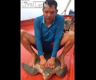 ウミガメを虐待