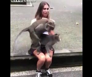 少女の膝の上で交尾する猿