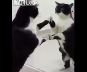 鏡に映る自分を見るネコ