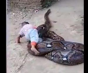 大蛇と遊ぶ幼児
