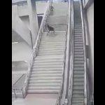 【動画】男性が階段から豪快に転げ落ちる衝撃映像