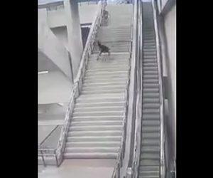 階段から転落