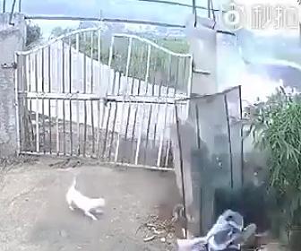 猛スピードで門に突っ込む車