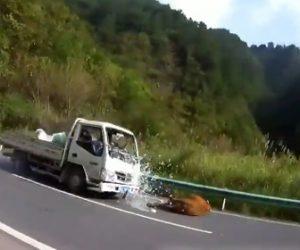 トラックが牛に突っ込む