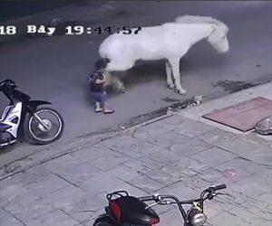 少年が馬に蹴り飛ばされる
