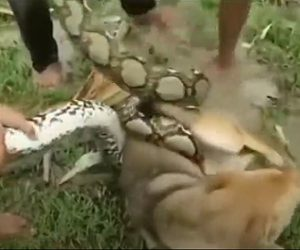 大蛇に襲われた犬を助ける子供