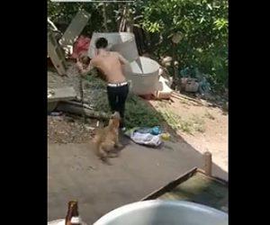 犬を棒で殴る男が他の犬に噛まれる