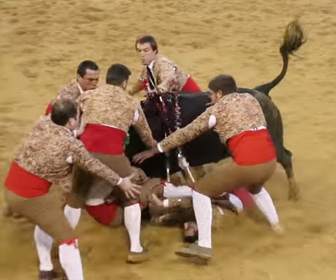 暴れ牛が闘牛士に突っ込む