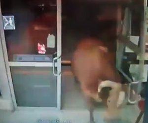 暴れ牛が店内に入って来る