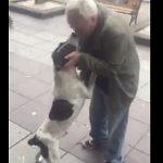 【動画】3年間見つからなかった犬を道で発見。ご主人に遭った犬の反応が…
