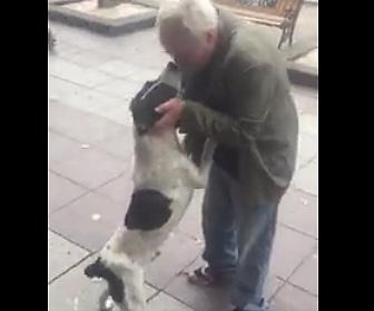 3年ぶりに愛犬に遭う