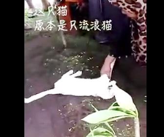 死亡した飼い主の墓から離れない猫