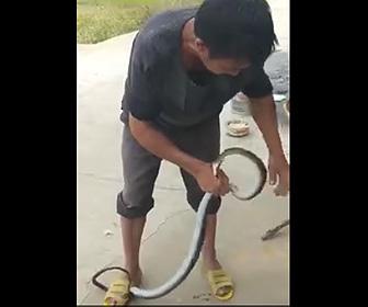 生きた蛇の革を剥ぐ衝撃映像