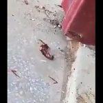 【動画】スズメバチとゴキブリが戦っているが…衝撃の結末