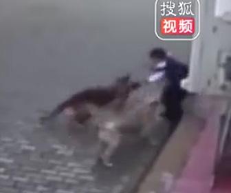 犬が少年に襲いかかる