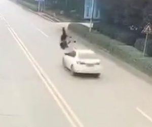 母と子が車にはね飛ばされる