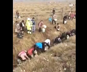 タンカーから漏れた油を盗む村人