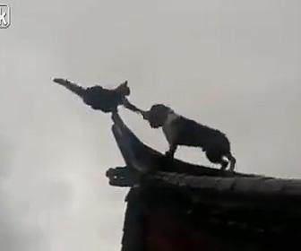 犬VSネコ 屋根の上で犬に追い詰められたネコ