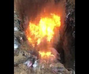 【動画】穴に落とされた豚が生きたまま焼かれてしまう衝撃映像