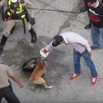 【動画】スタンガン、催涙スプレー、ヘルメットで殴っても噛み付き離さないピットブル