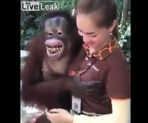 【動画】チンパンジーが美女の胸を揉みまくる衝撃映像