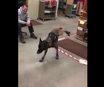 【動画】警察犬にスノーブールを履かせたが動きが面白すぎる
