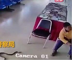 【動画】警察署にヘビが侵入し椅子に座る男性に飛びかかって来る衝撃映像