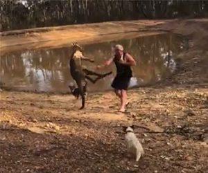 【動画】カンガルーに蹴り飛ばされる飼い主を助けに行く犬達