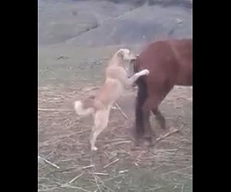 【動画】馬にじゃれつく犬。後ろ足で蹴り飛ばされてしまう