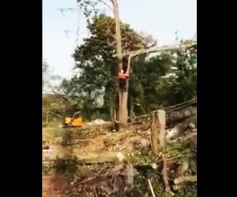 【動画】作業員が木に登って木を切るが恐ろしい事故になってしまう