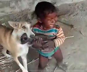 【動画】子犬が欲しい赤ちゃんVS子犬を守る母犬