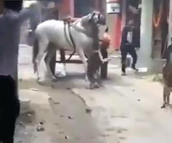 【動画】荷馬車の馬にピットブルが襲いかかる衝撃映像