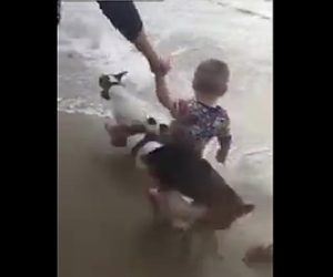 【動画】波打ち際の少年に猛スピードの犬が突っ込んで来る衝撃映像