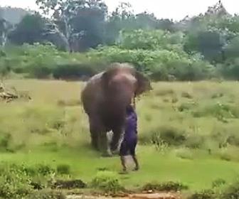 【動画】酔っ払い男が野生の象に近づいて行くが恐ろしい目に遭う