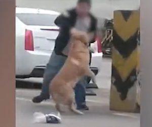 【動画】飼い犬のゴールデンレトリバーを虐待する最低な男